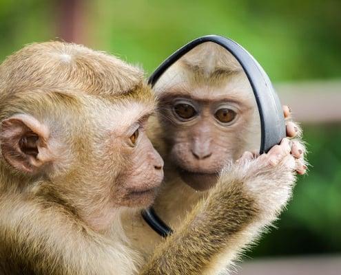 Abe kigger sig selv i spejlet - en oevelse