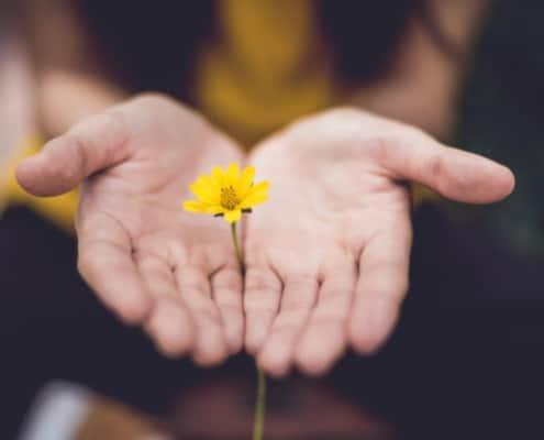 Hænder og blomst med redskaber til modgang, stress og traume