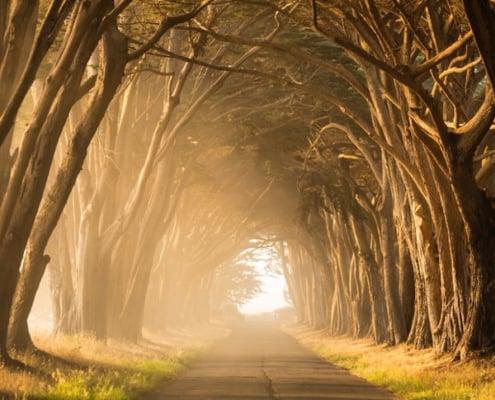 tunnel af lysende træer som tegn på håb